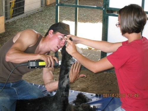 Cody & Faith giving The Taxman his first haircut.