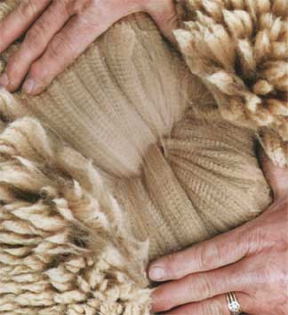 See  What We Do With This Incredible Fiber