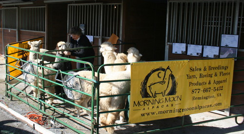 Southern Select Alpaca Show Advertising Your Herd
