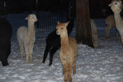 Maverick and his buddies