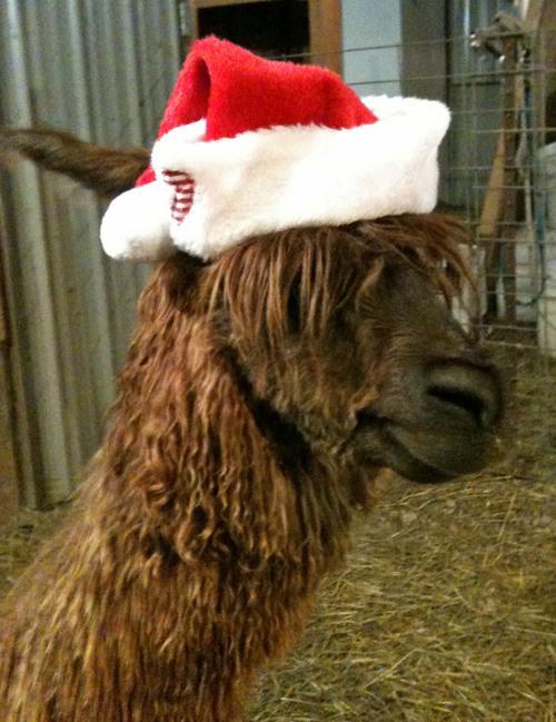 Fiona playing Santa