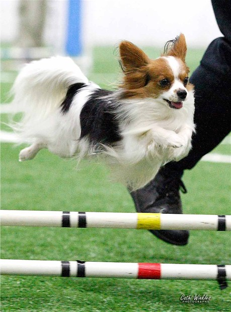 Yahtzee competing in agility
