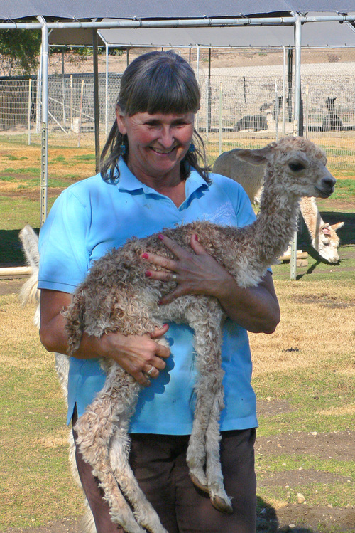 Cindy with a day-old cria