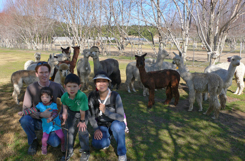Joe and his family enjoying a lazy morning with the alpacas!