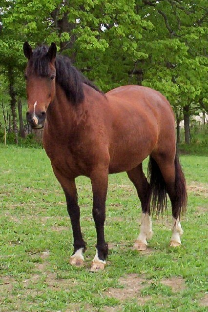 Memorial's Sassy Princess...Curly MFT dam of Red Ryder!