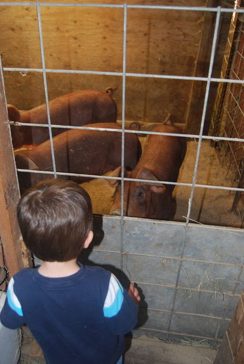 Hayden meets the three little pigs!
