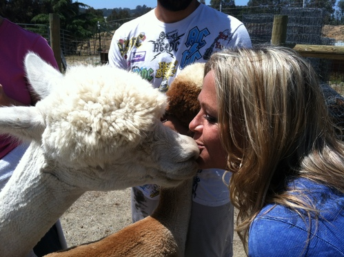 Alpacas Kisses