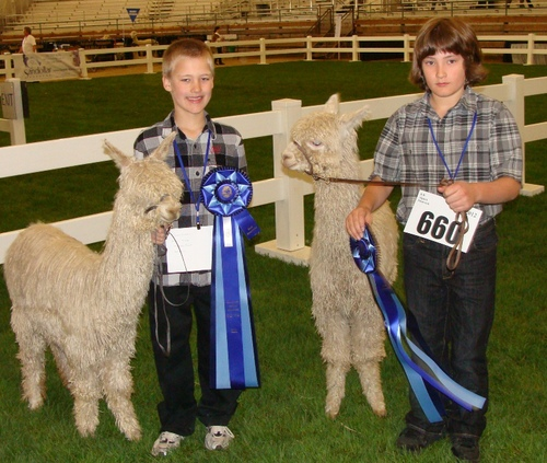 Cody and Chase youth Showmanship PNAA 2012