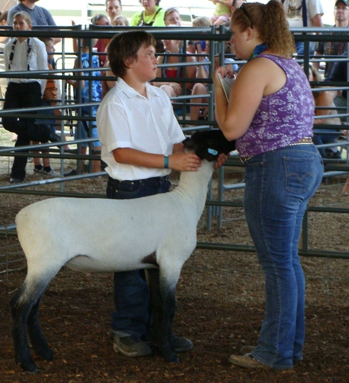 Cody and a Lamb