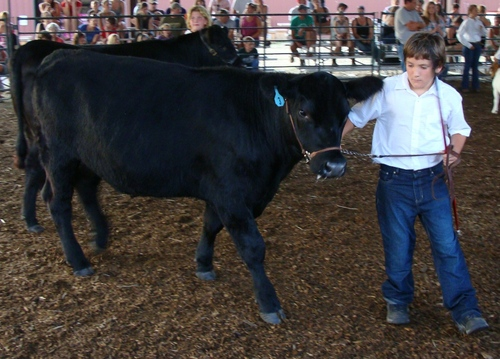 Cody and a Steer