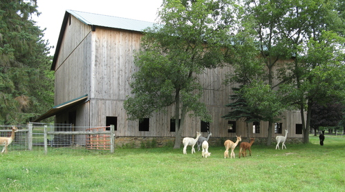 A well-ventilated barn.