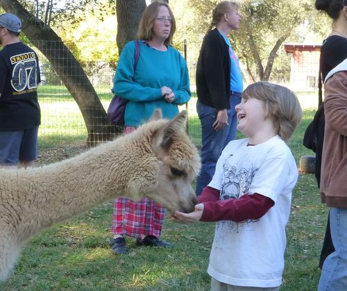The joy of feeding an alpaca.