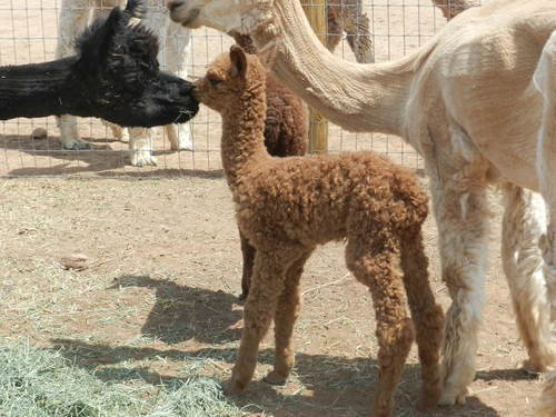 Freedom- cria # 2- AWESOME!