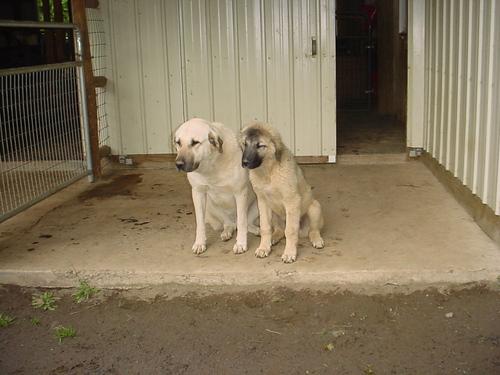 Uriel and Raphael