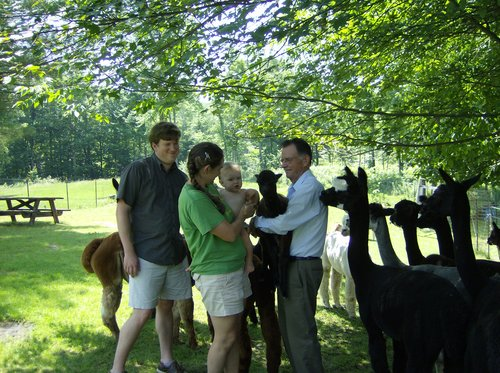 Alpacas are friendly, curious, and safe for anyone!