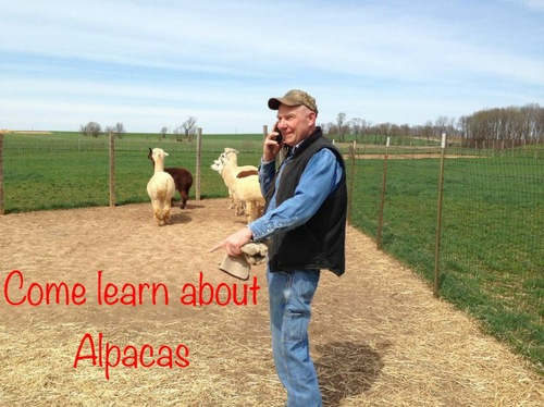 Come Learn About Alpacas