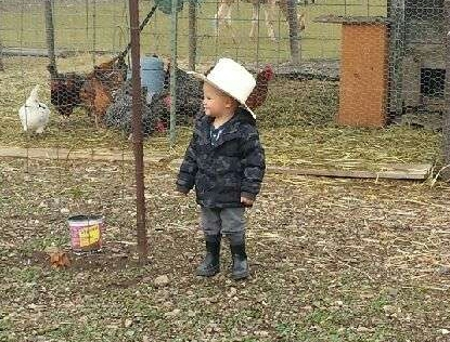 Well I fed the chickens Grandma..I'm a good cowboy