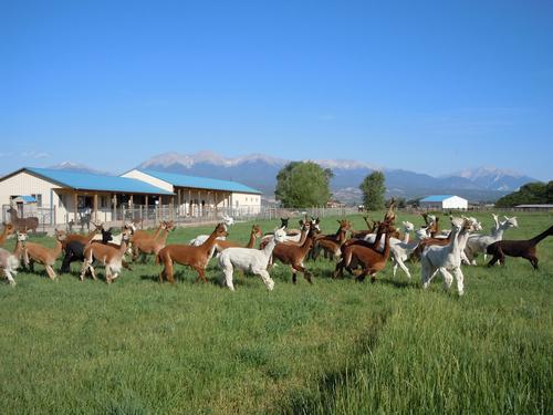 Stevens County Cattlemen's Association