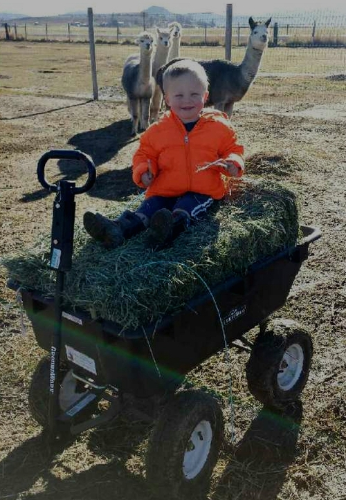 Ahhh..I get a ride in the hay wagon...yeah!!