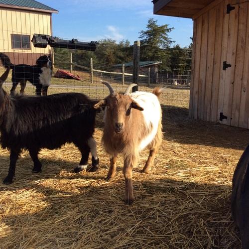 MAPACA: Good Time Ridge Farm, LLC is a farm located in Augusta, West