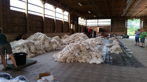 piles of sorted and graded fleece