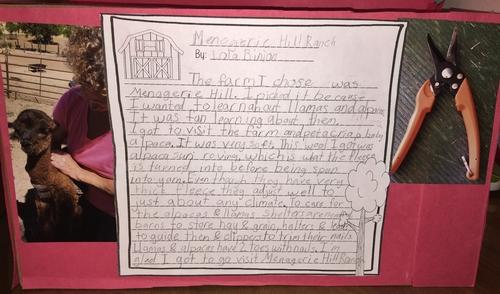 Lola's Report