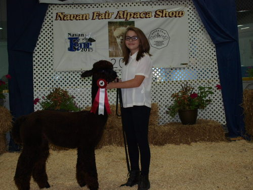 Reserve Champion Black Jax