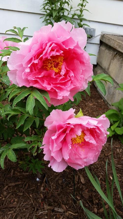 our perennial gardens