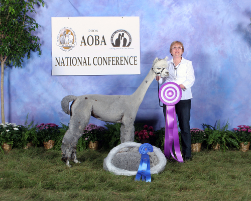 Alpacas For Sale: CR Peruvian Princess Grace: Huacaya