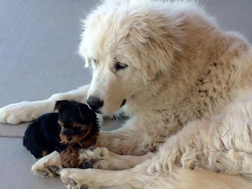 Charm and Mitzi