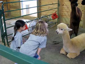 Photo: Pearl Moon Alpacas