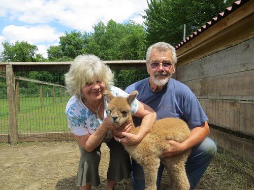 paca luv alpaca farm is an alpaca farm located in pascoag rhode island owned by bill miriel. Black Bedroom Furniture Sets. Home Design Ideas