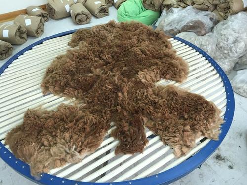 Fleece Workshop with Wini Labrecque
