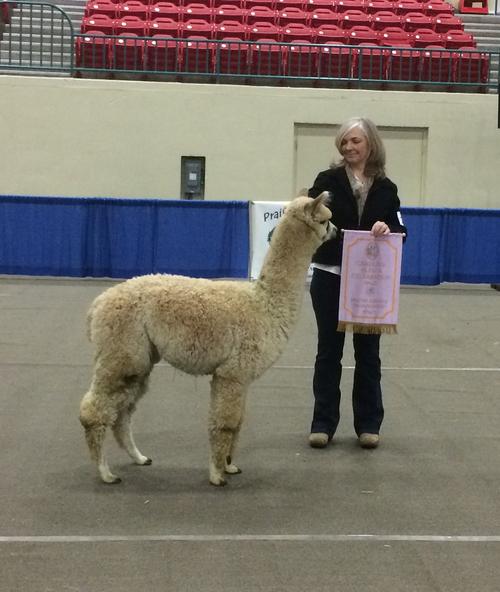 ESTATES LEGENDARY PICASSO-Carolina Alpaca Celebration