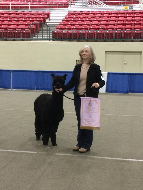Estates Obsidian Palesides-Carolina Alpaca Celebration 2017