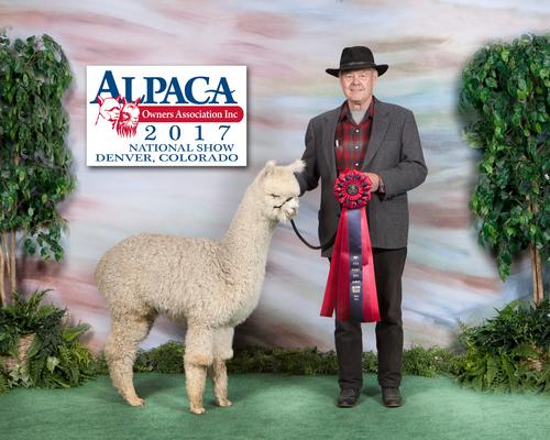 Estates Purely Appraising-AOA National Show 2017