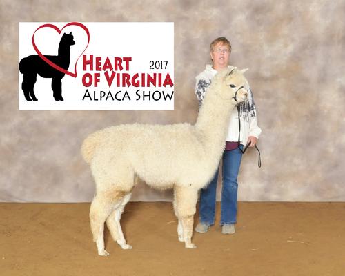 Alpacas For Sale: Praline Paulina: Huacaya, Female, Unproven: West