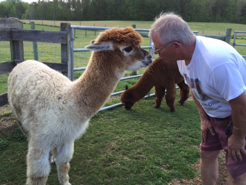 Alpaca Dreams Llc Is Has Alpacas Llamas Gift Shop Located In Louisburg North Carolina Owned By Mike And Sarah Conyer Has Alpacas Llamas Gift Shop