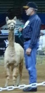 Randy & Charlotte at 2013 A-OK Halter Show