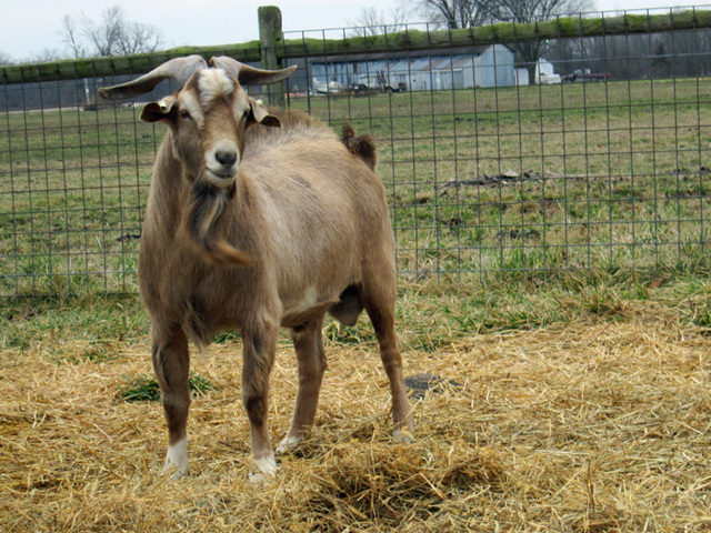 AKGA: Sun Dusk Farms is a goat farm located in Defiance, Ohio owned