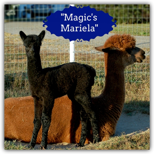 Magic's Mariela (Girl)