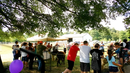 Join us for a day in the country at our 10th Annual Fall Alpaca Festival #odffest18