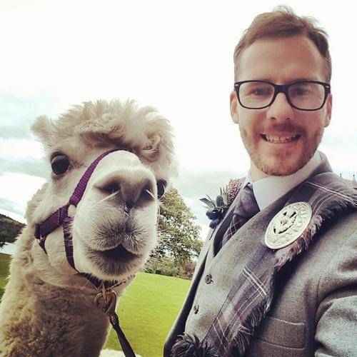 Bizarre new trend sees Scots couple Jean Macdonald and Stuart Ramsay offer alpaca weddings in Innerl
