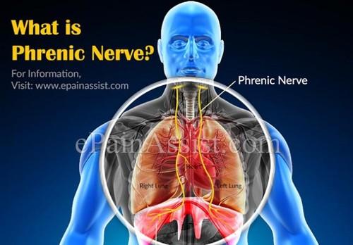Diagram of Phrenic Nerve