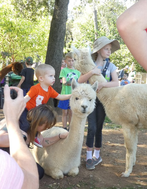 National Alpaca Farm Days in California