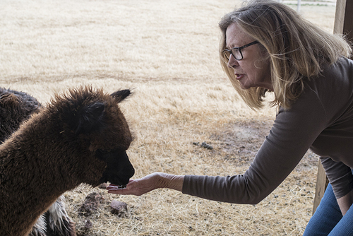 Lincoln County's Robinson family shows alpacas may offer Oklahoma ranchers new opportunities