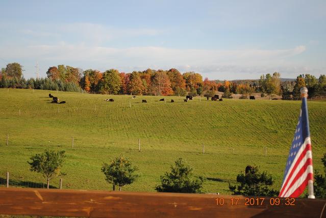 Openherd: Kiwidinok Farm is a Yak and Katahdin Sheep Ranch