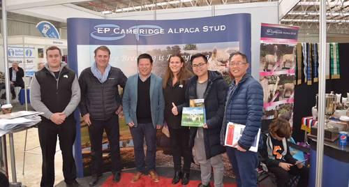 Local alpaca fleece grabs global interest
