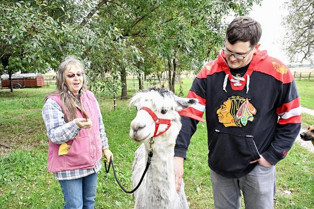Sheldon couple run alpaca farm near Ashton