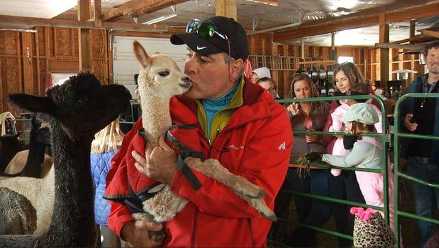 Bozeman's Alpacas Of Montana holding #NameTheBabyAlpaca contest